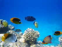 Underwater life. Underwater photo of a hard-coral reef Stock Photo