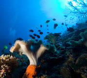 Underwater life Royalty Free Stock Photo