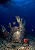 Underwater life Royalty Free Stock Image