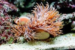 The underwater life Royalty Free Stock Photos