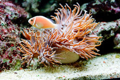 The underwater life Royalty Free Stock Images