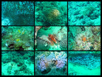 Underwater life. Deep water of Indian ocean, Maldives Royalty Free Stock Photo