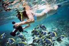 Underwater Life. Underwater lfe. Girl swimming with fishes royalty free stock photos