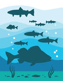 Underwater life. Sea. vector illustration Royalty Free Stock Photos