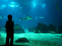 Underwater life. Young boy enjoying the underwater life at aquarium Stock Image
