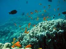Underwater life stock photography