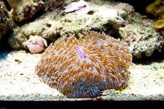 Corals underwater. Colorful underwater life in tropical sea aquarium, corals and marine animals Stock Photo