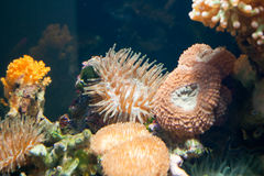 The underwater life Royalty Free Stock Photo