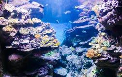 Underwater life - Barcelona Stock Image