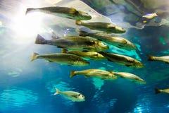 Underwater life - Barcelona royalty free stock photography