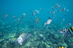 Underwater life of the Caribbean Sea Royalty Free Stock Photography