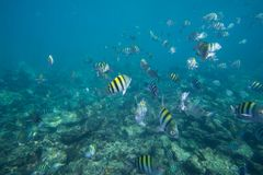 Underwater life of the Caribbean Sea Royalty Free Stock Images