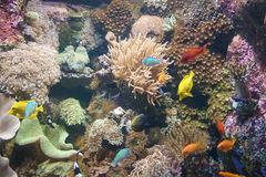 Underwater life with colored fish groups stock photo