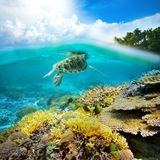 Underwater life of a coral reef Stock Photos