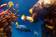 Underwater life Royalty Free Stock Image