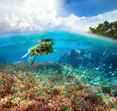 Underwater life of a coral reef. Royalty Free Stock Photography