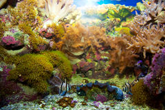 Underwater life. Coral reef, fish. Royalty Free Stock Image