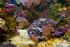 Underwater life. Coral reef, fish. Royalty Free Stock Photography