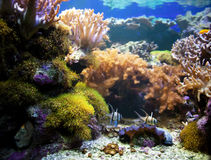 Underwater life. Coral reef, fish. Royalty Free Stock Images