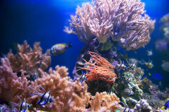 Underwater life. Coral reef, fish. Stock Photo