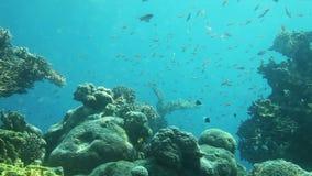 Underwater life of coral reef. Red Sea. Coral reef of Red Sea. Underwater Observatory Marine Park. Eilat, Israel stock video