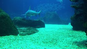 Underwater life of a coral reef. Sharks, rays and other fish. Large aquarium. Underwater life of a coral reef. Sharks, rays and other fish. Large aquarium stock video footage