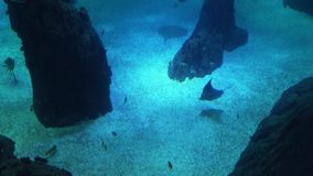 Underwater life of a coral reef. Sharks, rays and other fish. Large aquarium. Sea background video. School of fish, Sting rays, Whale Sharks. Stingrays, Whale stock video footage