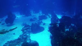 Underwater life of a coral reef. Sharks, rays and other fish. Large aquarium. Sea background video. School of fish, Sting rays, Whale Sharks. Stingrays, Whale stock footage
