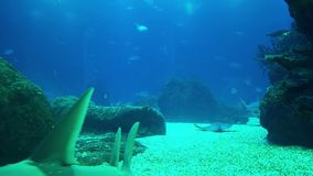 Underwater life of a coral reef. Sharks, rays and other fish. Large aquarium. Underwater life of a coral reef. Sharks, rays and other fish. Large aquarium stock video