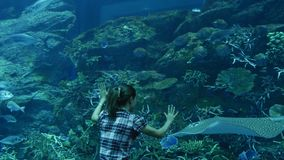 Underwater life of coral reefs. The woman behind the glass of the aquarium looks at the inhabitants of coral reefs stock footage