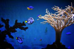 Underwater life of the deep sea Royalty Free Stock Images