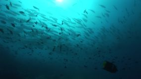 Underwater life diving Galapagos islands Equador South America Video stock video