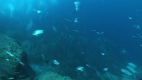 Underwater life diving Galapagos islands Equador South America Video stock video footage