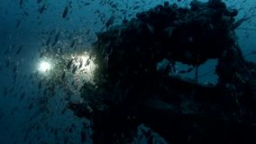 Underwater life exposion in the deep blu sea. Exploded underwater life around the wreck cannon stock footage