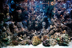Underwater life, Fish, coral reef Stock Image