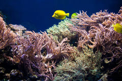 Underwater life, Fish, coral reef Royalty Free Stock Photos