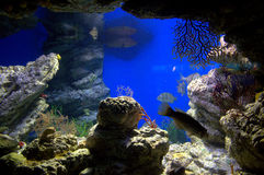 Underwater life royalty free stock images