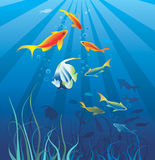 Underwater life. Fish, seaweed royalty free illustration