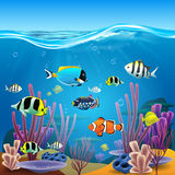 Underwater life. Illustration in vector Royalty Free Stock Photography