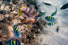 Underwater life of the inhabitants of the Red Sea Royalty Free Stock Images