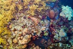 Underwater life of the inhabitants Royalty Free Stock Image