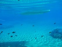 Underwater life in Kolona double bay Kythnos island Cyclades Greece, Aegean sea. Horizontal royalty free stock photos