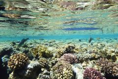 Underwater life landscape in the Red Sea Stock Images