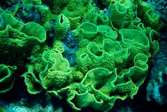 Underwater life landscape in the Red Sea Stock Photography