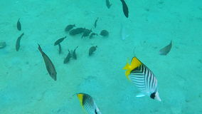 Underwater life near corals stock video footage