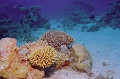 Underwater Life Of Coral Reef Stock Image