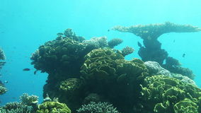 Underwater life of Red Sea Royalty Free Stock Photos