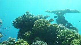 Underwater life of Red Sea. Coral reef of Red Sea. Underwater Observatory Marine Park. Eilat, Israel stock footage