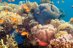 Underwater life in the Red Sea Royalty Free Stock Images