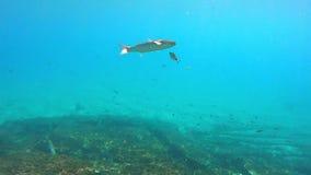 Underwater life stock video
